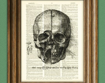 View of a Skull number 3, from Leonardo da Vinci sketch on vintage dictionary page book art print Davinci