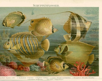 1894 fish ocean scene original antique sea print