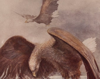 2 vintage book illustrations of eagles and fishes 1920s, to frame or for art and craft, lovely textured paper..