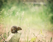 Chipmunk Photograph nature field meadow country ground squirrel green cute nursery art whimsical art