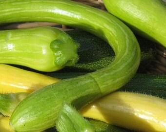 Squash,Tromboncino Italian Zucchini Squash Seeds