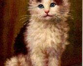 Vintage Postcard written in French Blue Eyed Kitten Cat with Blue Eyes 1943