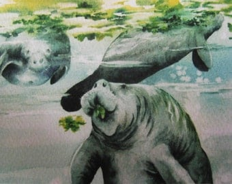 Manatees ACEO 566 manatees feeding Watercolor print Florida watercolorsNmore Endangered species collectible