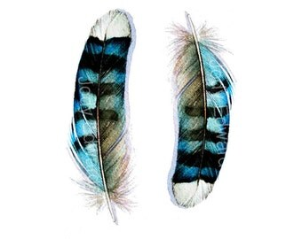 Two Blue Jay Feathers - Archival Print