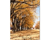 Autumn Streets Golden Trees Yellow Orange Leaves Home Decor  Fine Art Photography Print Wall Custom Size