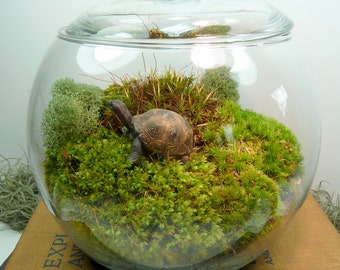 Small Covered Vase Terrarium, Tortoise, Moss.  Great for HOME or OFFICE. Nice Unusual Gift. Terrariums by mossterrariums on Etsy.