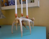 4 Shed Antler Candle Holder, white tail deer