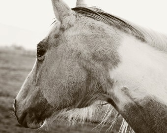 Black and White Horse Profile, Modern Equestrian Art, Horse Wall Art