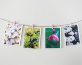 SALE Flower Photo Cards - Set of 4 Note Cards - Pastel Colors - Bunny, Pink, Lavendar - White Daisy - For Her  - Teacher Gift, CLEARANCE