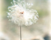 Dandelion Dreams, Flower Art Photography Print, Fluffy Pastel Dreamy Girl Mint Green
