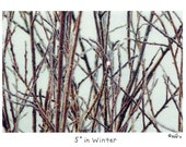 5 degrees in Winter Photo Story Card