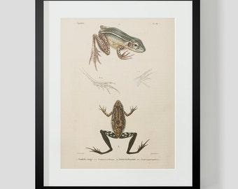 Vintage Amphibian Frog Plate 88