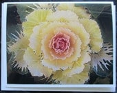 Yellow Cabbage Flower Note Card