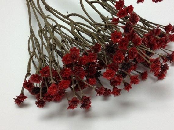 Burgundy Red Plastic Baby S Breath Gypsophila