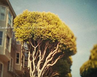 "San Francisco Photograph - Lombard Street - Fine Art Photography - Blur Tree Nature Photograph - Tree Lined Road - Laura Ruth - ""City Tree"""