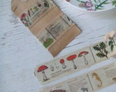 SALE - mt washi tape - sea animals tape - washi tape - SAMPLE size - 1 m of each until SOLD out - botanical washi