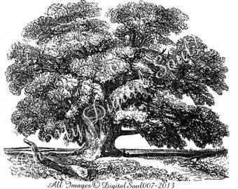 Old Oak Tree Digital Download Transfer Image Digital Collage Sheet Instant Download