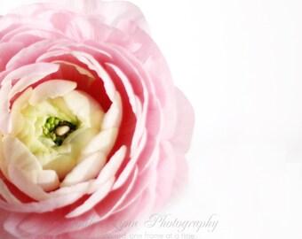 pink decor flower mint green white yellow spring ranunculus  / 16x20 Fine Art Photograph / Ranunculus n.4