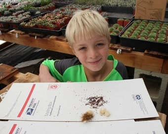 One Hundred 100 Barrel Cactus Seeds, ready to plant, picked and packed by James the Succulent King Merry Christmas