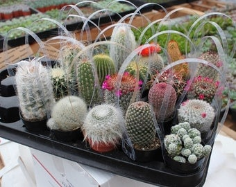 "1  Awesome Cactus potted in a 2.5"" plastic container:  All are labeled with names succulents succulent"