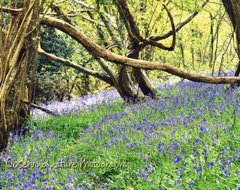 Bluebell Wood  Fine Art Photography Download