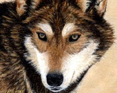 ACEO card, Giclee print, wolves, wolf art, wolf ACEO, ACEO cards, wolf decor, Ellen Strope, prints