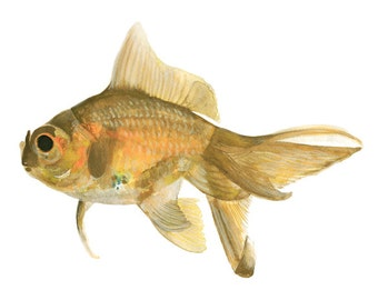 Mr. goldfish ORIGINAL watercolor painting signed by artist Stephanie Kriza