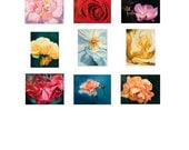 "Fine Art Print Roses 16x20"" Prints Pick 4 Pay for 3-Wall Decor-Home Decor by Peggy Martinez"