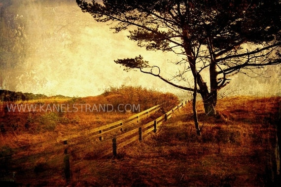 Dreamy nature photo print, rustic landscape, Norwegian pine, travel photography