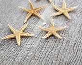 SALE Star Fish / vintage starfish collection / 3 inch