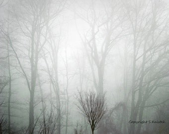 Forest Photograph Fog Trees Lovely Morning Light Foggy Forest Landscape Muted green gray Wall Art 8x10