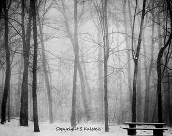 Misty Fog Filled Forest Photograph Foggy Tree Landescape Black and White Wall Art Empty Bench 8x10