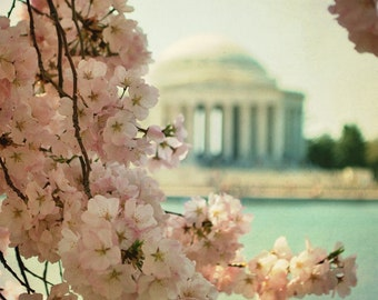 Washington DC Photography Cherry Blossoms Jefferson Memorial Tidal Basin Spring In DC Wall Art 8x8 Cherry Blossoms Photograph