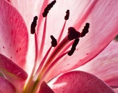 Pink Lily Print, Still life flower wall art, Cubicle decor, Gift for her, Available in many Sizes