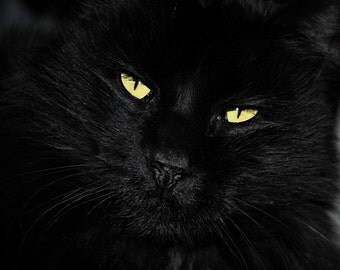 Black Cat Photography gorgeous eyes,cat lovers gift,gold eyes,Gifts under 25,cat lovers home decor,golden,closeup of black cat, black cat