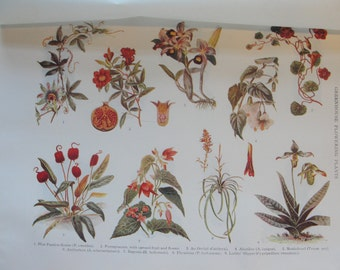 1911 original Botanical Greenhouse Flowering Plants 7 x 10 inches