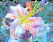 Soft and dreamy, yet vibrant lily in blue, white, pink, orange.