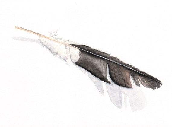 Magpie Feather  watercolor painting - print of watercolor painting - 5 by 7 print, bird art, wall art, home decor