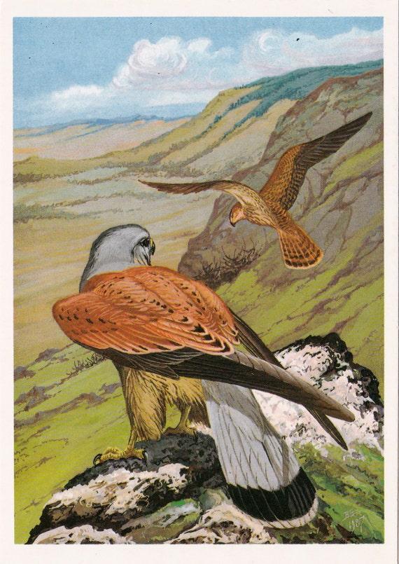 Vintage Birds Series (Kestrel) Print - 1988
