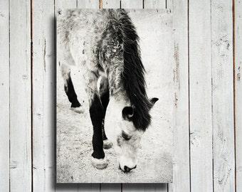 "Buckskin - Horse decor - 16x24"" canvas print - Horse art - Horse decoration - Horse photography - Black and white horse decor"