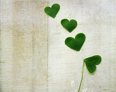 Love and Luck- Shamrock Hearts Photograph- Clover- Nature Photography- Green- Hearts- 8x8 Fine Art Print- Textured Image - kellynphotography