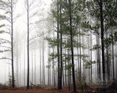 Tree Photography, Foggy Mist Forest, Nature Photography, Green Grey Brown, Fog Photo, Arboreal Art, Pine Trees Photo, 8x10 Fine Art Print