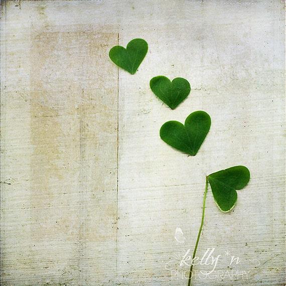 Still Life Photography- Shamrock Hearts Photograph, Lucky Clover Photograph, Nature Photography, Green Shamrock Hearts, Lucky Love Photo