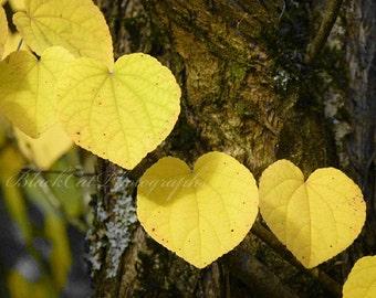 Heart photograph, romantic wall decor, leaf valentine, heart art Fall colors, nature, love, tree heart photo, yellow decor, forest 5x7 print