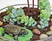 TOPSY TURTLE terrarium -, birthday gift, terrarium, air plants, succulent terrarium,centerpiece, home decor,turtles, office gift