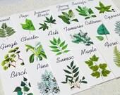 Botanical Wedding Cards, Woodland Table Tents, Wedding Tree Cards, Wedding Leaf Cards