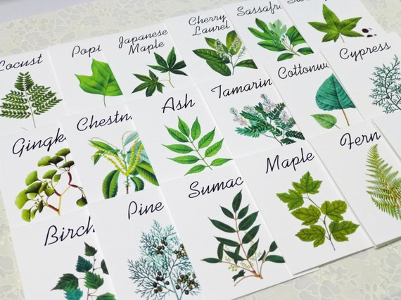 Botanical wedding cards woodland table tents wedding by for Nombres d plantas ornamentales