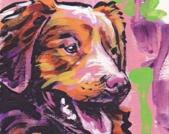 Nova Scotia Duck tolling Retriever portrait giclee print of modern Dog pop art painting bright colors 12x12 toller