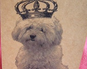 Poodle Maltipoo Malti-Poo Bichon Frise Dog With Crown Set of ANY 3 Greeting Note Cards Invitations Kraft Cardstock matching envelopes 5 x 7""