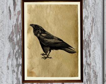 Crow decoration Antique raven print old paper art Bird illustration AK249